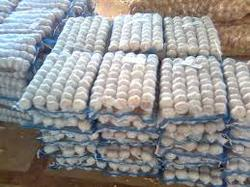 We are supply fresh garlic, China normal white fresh garlic for sale