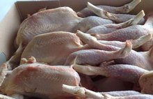 Whole frozen chicken calibrated, HALAL packed in the carton.!!! Gold Supplier !!!