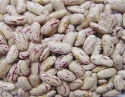 High quality Speckled Kidney Beans