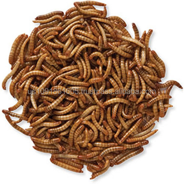 Wholesale bird seed mealworms