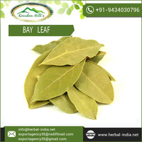 Get Best Bargain Rate on Bay Leaf - Clove Scented from Prominent Supplier of Industry