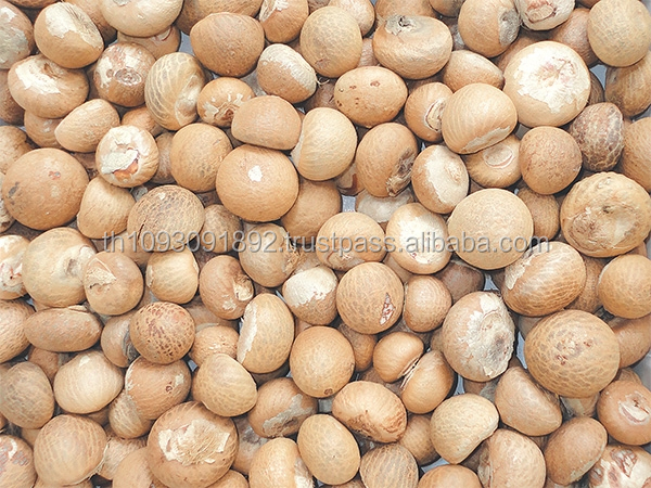 Betel Nuts cheap price