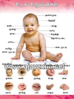Parts of the Body in Tamil Educational Poster