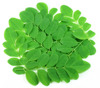Herbal Moringa Leaves in bulk