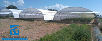 Single span Plastic cover Greenhouse