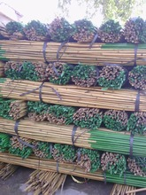 NATURAL BAMBOO POLES FOR AGRICULTURAL