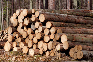 Teak wood logs/ sawn timber at the most competitive price from Europe