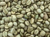 Unwashed robusta green coffee beans Grade 1 screen 18 BEST PRICE