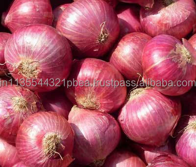 Fresh Onion Red & White
