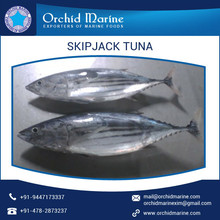 Individually Processed Bulk Size Skipjack Tuna from Reputed International Trader
