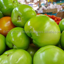 FRESH TOMATO / FRESH TOMATO AND TOMATO PASTE / FRESH GREEN TOMATOES