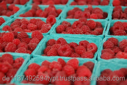 Fresh Strawberry, Frozen Strawberry, Berries For Sale.