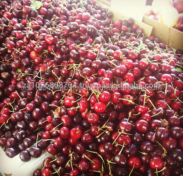 bagged china fresh cherries price lower and high quality