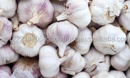 New crop fresh natural pure white garlic hot for sale