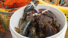 FROZEN LOBSTER / FROZEN LOBSTER TAIL / FRESH LIVE LOBSTER FOR SALE WORLD WIDE