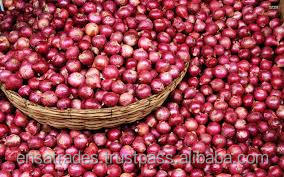 fresh small onions with best price from india | bulk small red onions