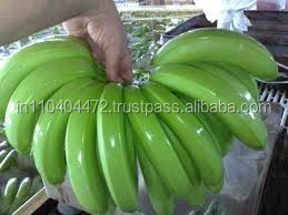 Very Nutrition and Healthy Fruit Type Product Ripenend Fresh Green Banana