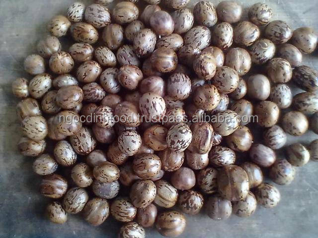RUBBER SEEDS WITH BEST PRICE AND GOOD QUALITY