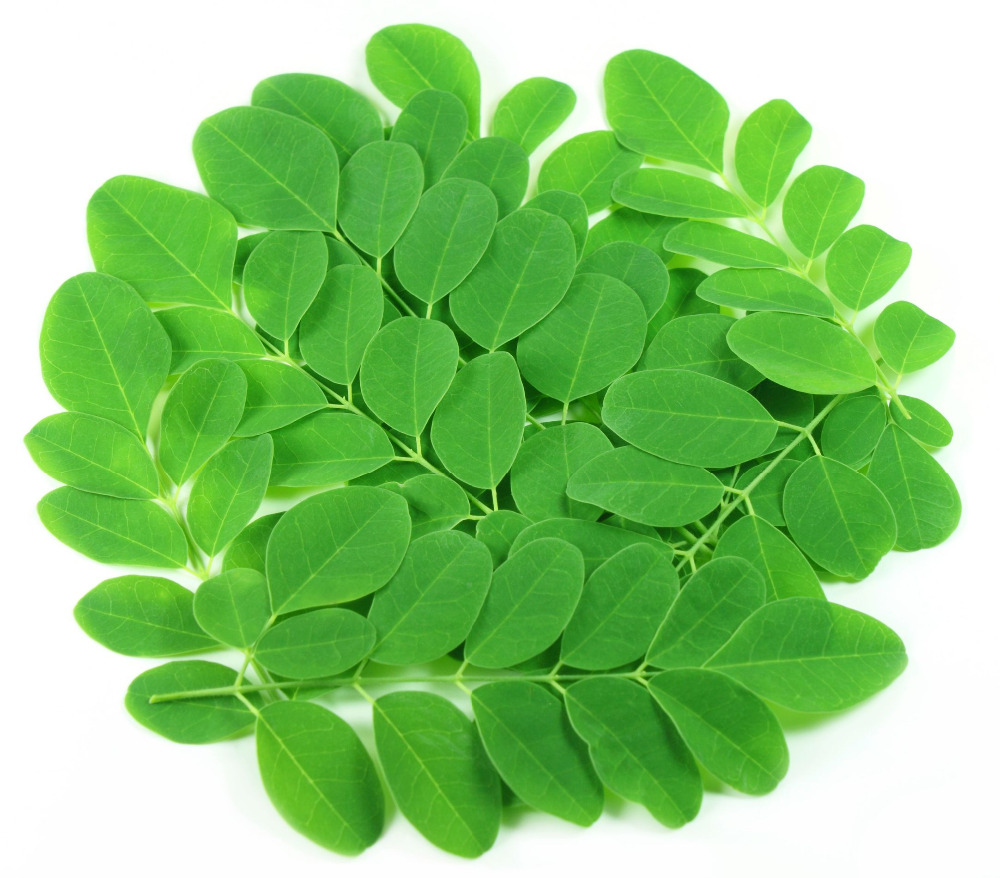 Health care product moringa leaf for capsules manufacturing