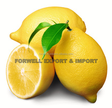 We supply fresh lemon with strong quality