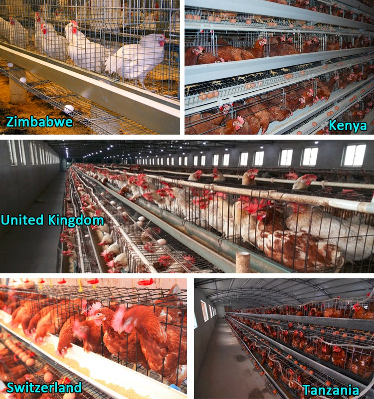 layer egg chicken cage for wholesales