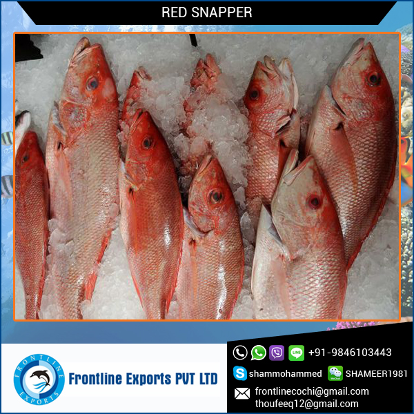 High Quaility Seafood Fish Frozen Red Snapper