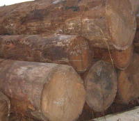 Keruing wood logs (diameter min: 40cm)