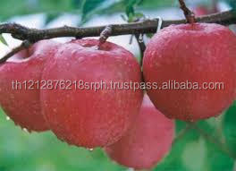 Fresh fuji apples, Red fuji. royal galla, Gold delicious and green apples