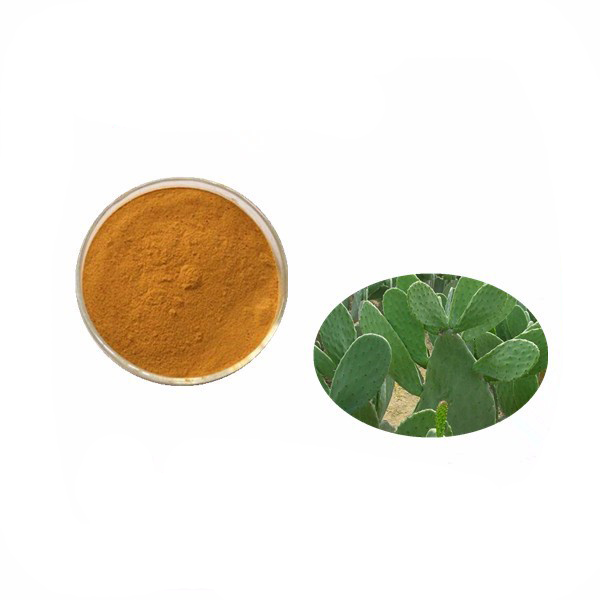 10:1 High Quality Prickly pear Extract Cactus Powder