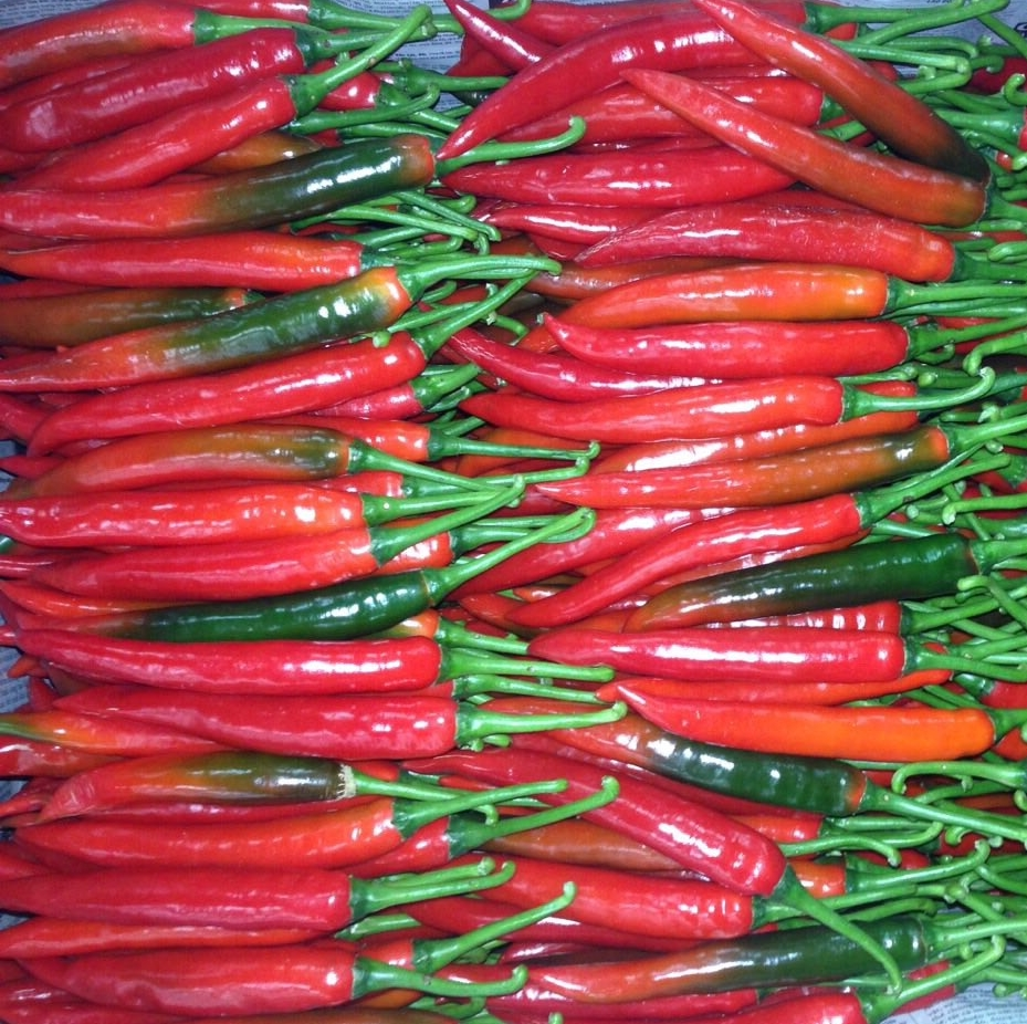 CHEAPEST PRICE FRESH CHILLI IN MALAYSIA VIETNAM - $ 414 PER TON