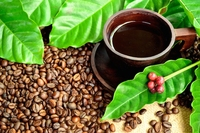 Coffe Traditional of Indonesia
