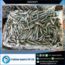 A Grade 100% Fresh Protein Rich Dried Anchovy Fish Exporter