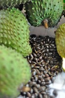 Guyabano/ Soursop Seeds
