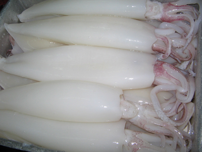 Cleaned White Frozen Squid Tube Size U5-U7