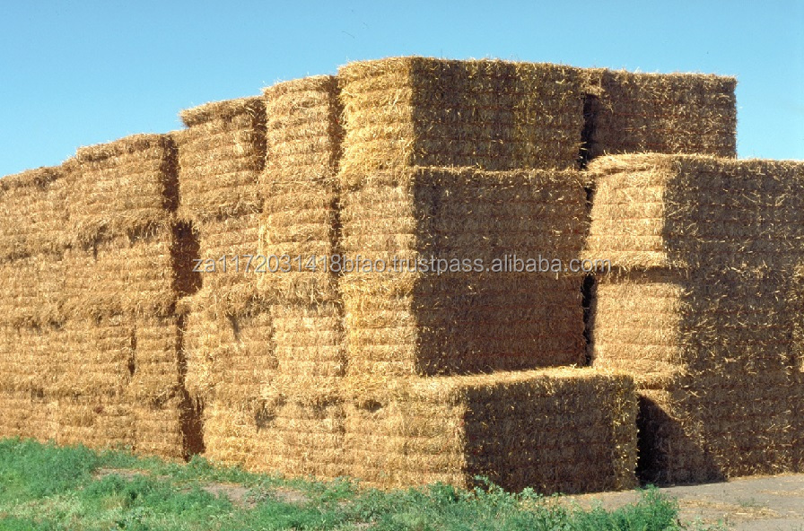 ALFALFA HAY FOR SALE ( BIG COMPRESSED BALES )