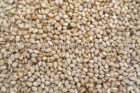 NEW CROP OF SESAME SEEDS FOR CONSUMPTION FROM INDIA