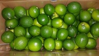 FRESH SEEDLESS LEMON( LIME)