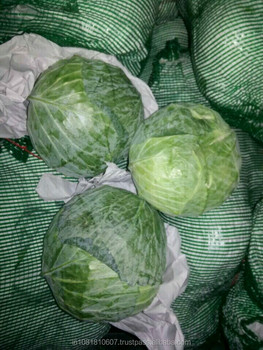 Cabbage Suppliers