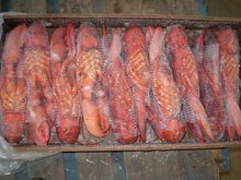 Frozen spiny lobster tails (p argus) / American Lobster tail/ green lobster tail