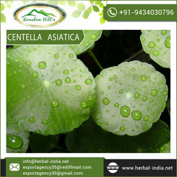 Factory Suply Madecassoside Centella Asiatica Extract