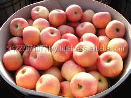 Quality Red Fuji Apple Of Apple Fruit best Price