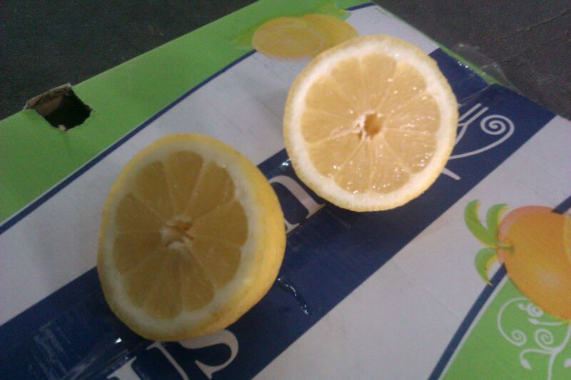 fresh Eureka lemon for sale