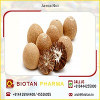 Whole Dried Areca Nut - Betel Nut at Competitive Price