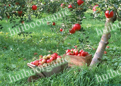 Apple Sap Concentraat Prijs/Concentraat Bulk Apple Sap