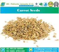 Best Quality Carrot Seeds from India (Gujarat)