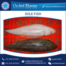 Affordable Price Fresh Frozen Sole Fish Seafood Manufacturer