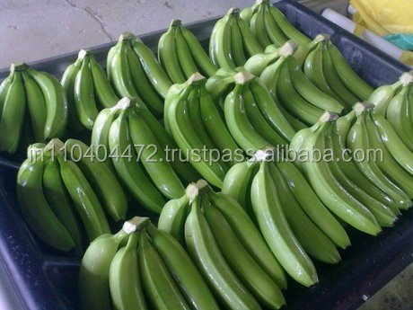Common cultivation type Agri Product Green fresh Banana.