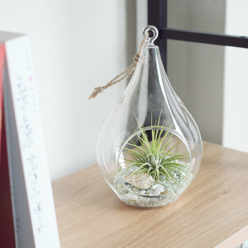 Tillandsia Air Plants Hanging Teardrop glass Ionantha set by Joinflower Joinfolia