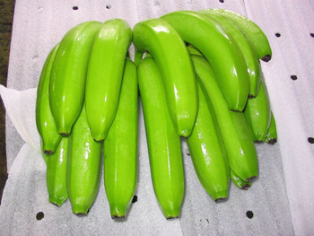BEST PRICE FRESH CAVENDISH BANANA VIETNAM/ Ms.Sam +841683521884/BEST PRICE