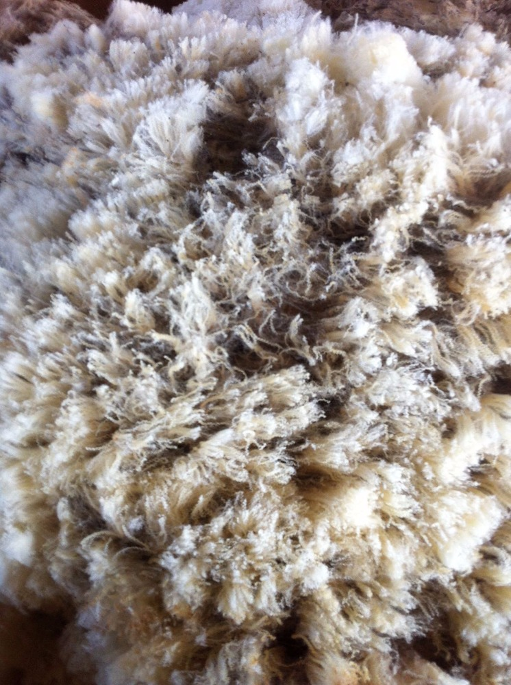 Hight quality 100% raw wool merino direct farmer